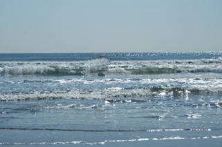 sea-result
